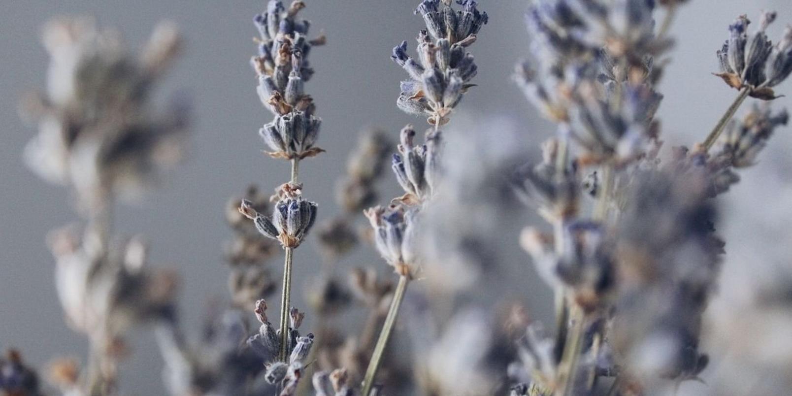 Untitled-design-83-lavender
