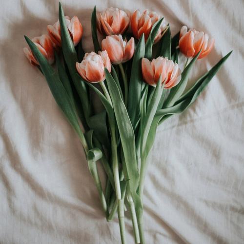 double-tulip