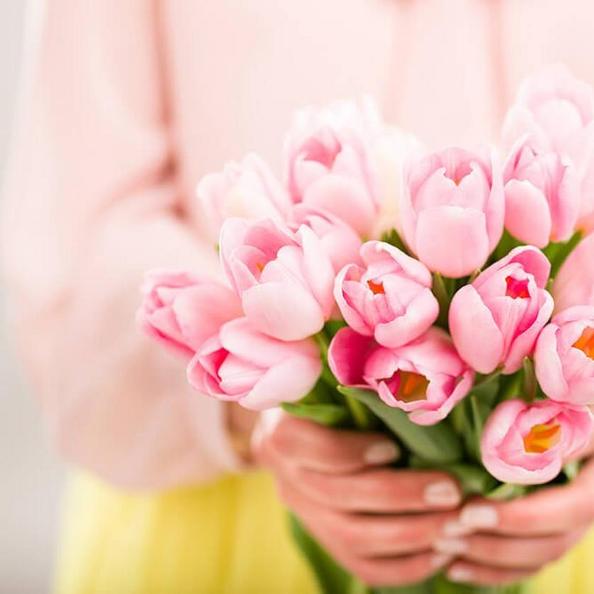 pink-tulips-ultimate-flower
