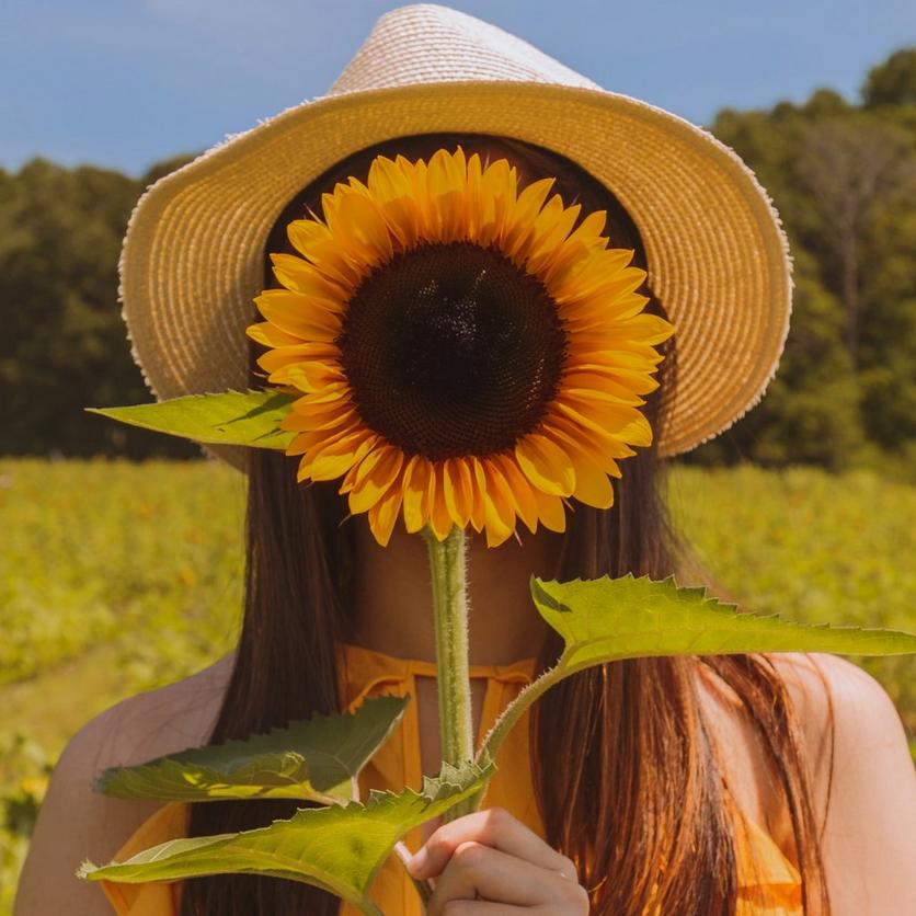 small-taiyo-sunflower
