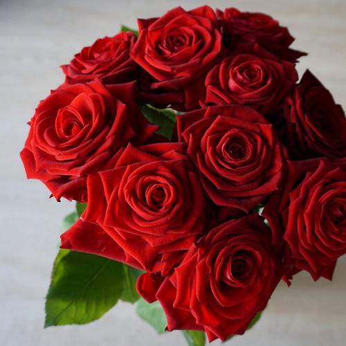 ten-red-roses