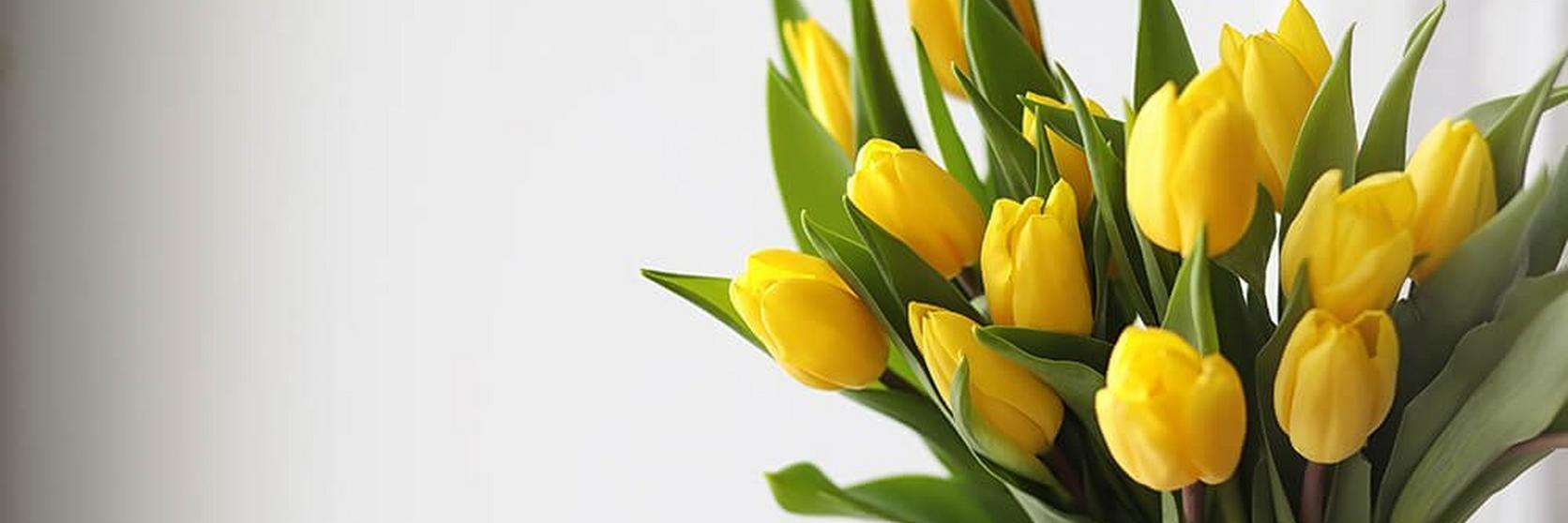 yellow-tulips-ultimate-flower